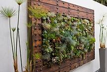Rośliny na ścianie
