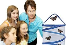 UNIT PLAN: Science: Caterpillar to Butterfly / by Gabrielle Manoni