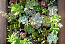 succulent ideas / by Jennifer Arnold