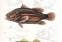 Per Olsen fisk og hav
