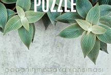 Xint Puzzle Collection