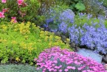 Rock Garden / Ideas and plants for a rockery and dry sunny spot.