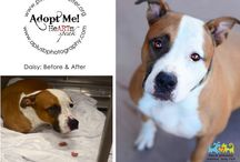 Dog Adoption / Information about adopting puppies and dogs from animal shelters