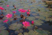 woda i kwiaty