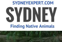 Wildlife | AUSTRALIA / All about seeing and experiencing wildlife in Australia, in the wild and at zoos.