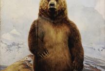 Vavas/bears!