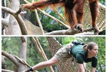 Zookeepers as Amimals / Being a zookeeper is hard work & sometimes you just need a little bit of fun. / by Sacramento Zoo