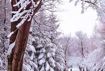 Winter / - die Welt in Eis und Schnee