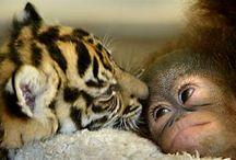 sweet baby animals / by Mitzi James