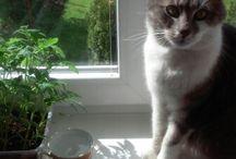 My cat..... *-*