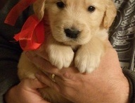 """Puppies & Pets / Cute pics and """"good to know"""" tips for the love of pets"""