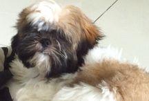 Raji / My little dog