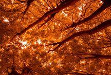 Alluring Autumn