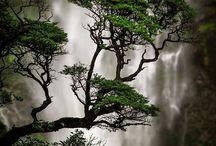 árvores maravilhosas .