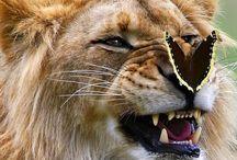 Animaux / Animaux subjugués par la beauté des papillons