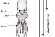 Mustekalatunti