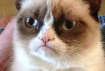 Grumpy Cat <3 / I Love Tardar Sauce and her brother Pokey <3