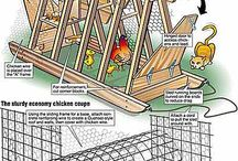 Homestead - ChickenSense / surely it makes sense to raise chickens .... blessed be those who were raised with chickens because these questions are answered innately -- history helps / by Victoria Susan Leigh