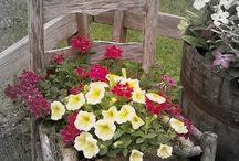stolicka kvetinac