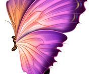 Pillangó***Butterfly