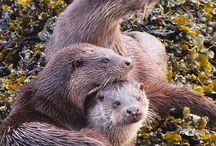 Otters !