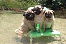 i love the pugs