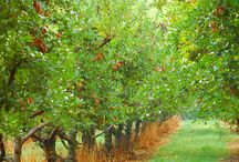I want an orchard