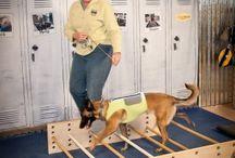 Тренажеры для собак