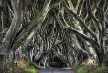 The Eerie Forest, photo by Dave Lally. These trees are known as the Dark Hedges and are located on the Bregagh Road, Armoy, County Antrim in Northern Ireland. / by India Griffin