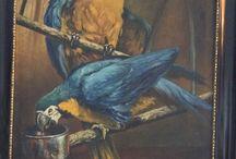 parrot / signed F L