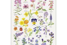 Langt bed med spiselige blomster