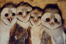 Animals-Birds-Owls / My totem bird, the owl. / by Ellary Branden