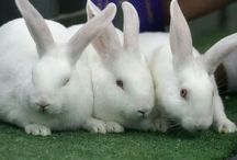 White Rabbits & other Bunny Rabbits! / White Rabbits X's 3 @the 1st of each month!
