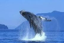 Grey Whales in Los Cabos and La Paz! / by Visit Baja California Sur