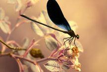 hmyz pěkný