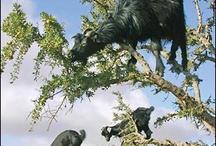 dyr i træ