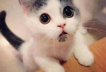 Pisicuțe