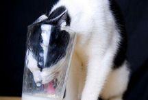 Luna, the cat