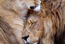 animals / by Amber Brooks