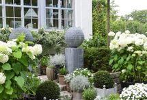Plants in pots outdoor