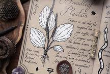 Botanical/ Травы