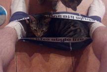 Gatitos comodon