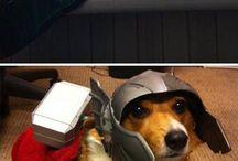 Funny photos, I love ❤️❤️❤️
