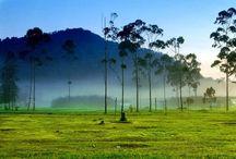 Tjiwidey.com – Potensi Alam Dan Keindahan Ciwidey / Situ Patenggang salah satu destinasi wisata di Ciwidey