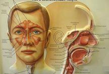 Аллергия ринит синусит