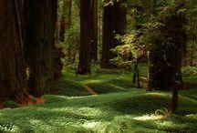 Redwoods Shoot