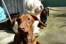 Dogs / Cães