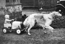 Greyhounds - Historic