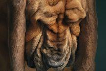 Animals :) / by Lauryn Anne