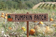 """PUMPKIN Patch / Therefore Jesus said again, """"Very truly I tell you, I am the gate for the sheep. I am the gate; whoever enters through me will be saved. They will come in and go out, and find pasture. The thief comes only to steal and kill and destroy; I have come that they may have life, and have it to the full. John 10:7, 9-10  NO LIMITS ON PINS..ENJOY / by Jan Gruber"""